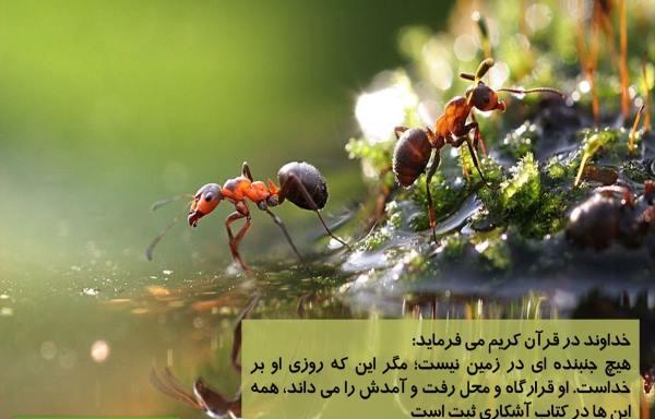 دعای رزق و روزی در قرآن - دعای سریع الاجابه جهت کسب روزی در قرآن