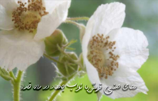 دعای صنمی قریش با ثواب جهاد در راه خدا
