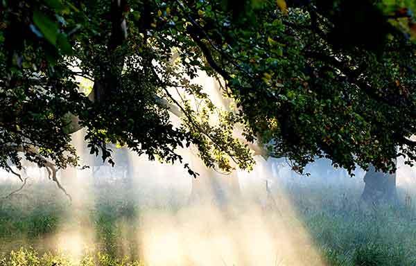 دعای عظیم پرخیر و تجربه شده برای دفع خطرات بزرگ