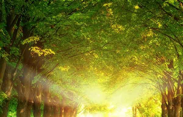 دعای مجرب برای موفقیت در روز و شب سریع الاثر